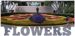 Wordless Wednesday: Epcot International Flower & Garden Festival