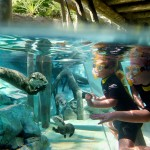 Freshwater Oasis at Discovery Cove