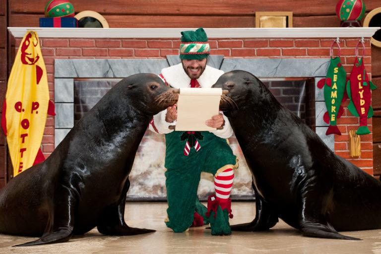 Image for Christmas Celebration Busch Gardens