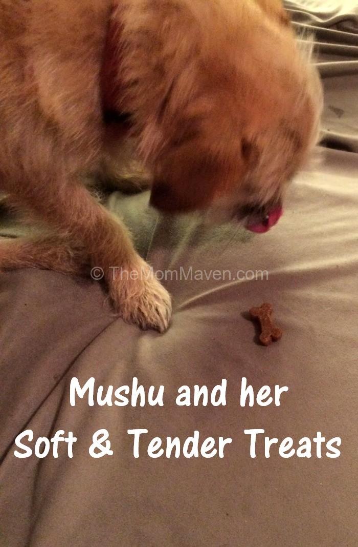 Soft Dog Treats Recipe Pumpkin Tapioca Starch Salmon