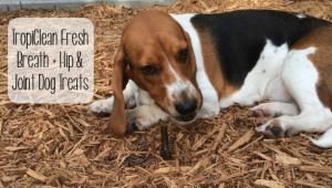 TropiClean Fresh Breath + Hip & Joint Dog Treats
