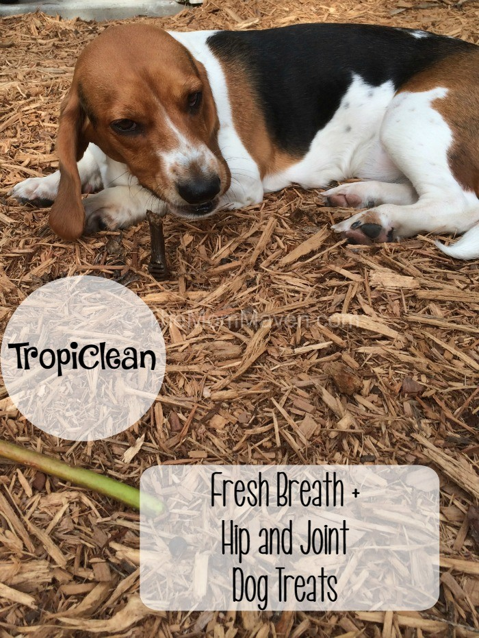 Best Dog Treats For Corgi Puppy
