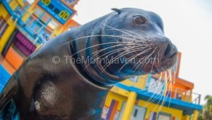 SeaWorld Orlando Announces Clyde and Seamore's Sea Lion High