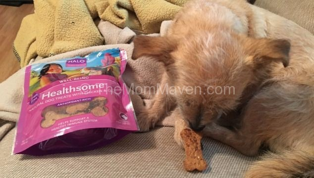 Try Halo Healthsome Dog Treats