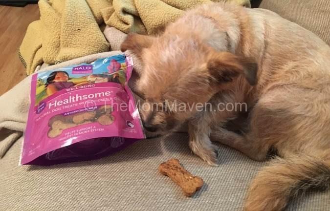 Healthy Soft Dog Food For Senior Dogs