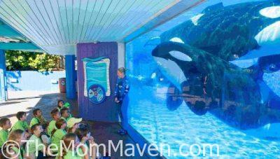 Let's Go to Camp at SeaWorld