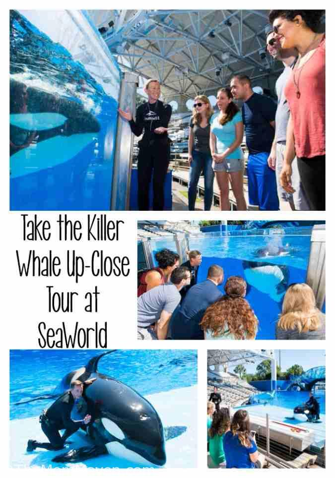 The Killer Whale Up-Close Tour gives guests the opportunity to meet the park's killer whales in ways never before offered at SeaWorld.