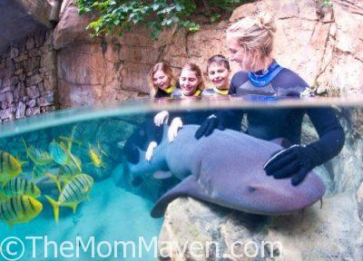 Discovery Cove Announces New Shark Swim Program