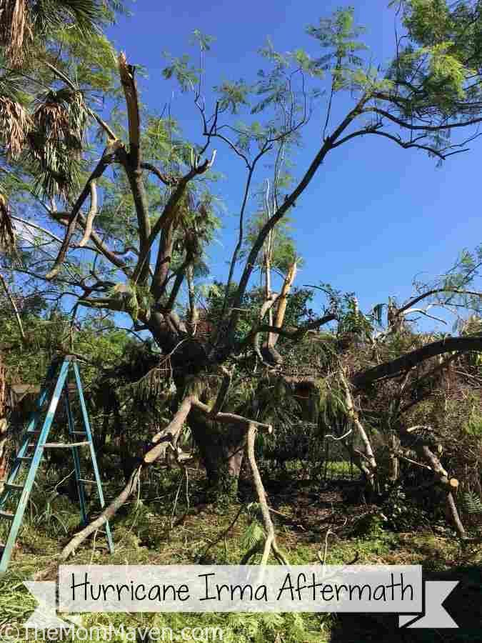 The Aftermath of Hurricane Irma in Bradenton, Florida