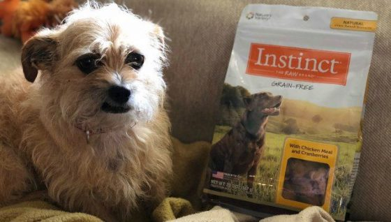 This month Mushu got to Instinct Dog Treats by Nature's Variety. As a dog mom I appreciate these treats because they are made in the USA, oven baked, grain-free, and gluten-free. Mushu just knows they taste yummy.