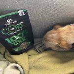 Wellness CORE Grain Free 100% Turkey Freeze Dried Natural Dog Treats Review