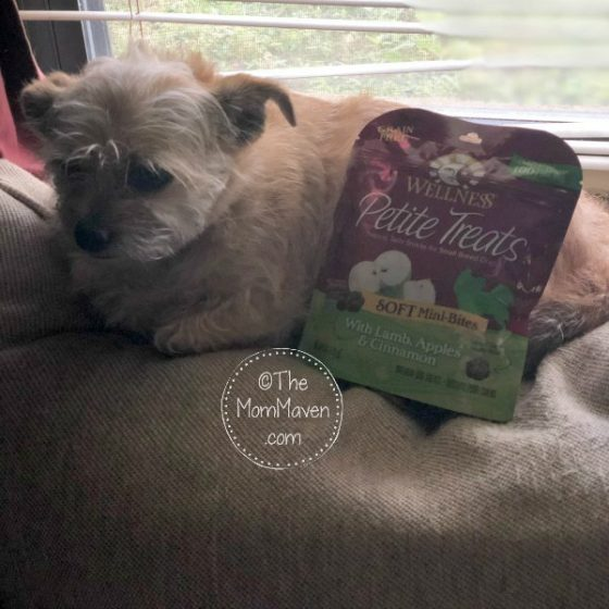 Mushu has a new favorite treat and it is Wellness Petite Treats which she got from Chewy.com. She loves that they are small, soft, and delicious.