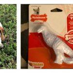 Powerful chompers have finally met their match with the Nylabone DuraChew Dental Chew Dinosaur Dog Toy.