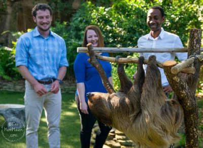 sloth encounter at busch gardens tampa bay