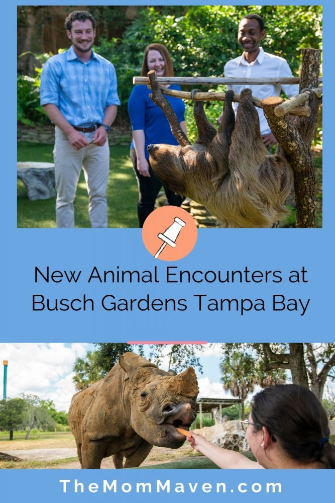 Now, in addition to riding Tigris, Florida's tallest launch coaster, guests at Busch Gardens Tampa Bay can now enjoy new experiences this summer with rhinos and sloths.