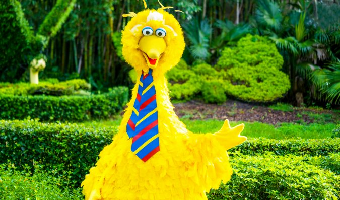 Big Bird is back at Busch Gardens, for a limited-time character photo opportunity.